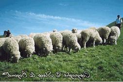 Natural washable 100% Shropshire wool mattress topper. Sleep
